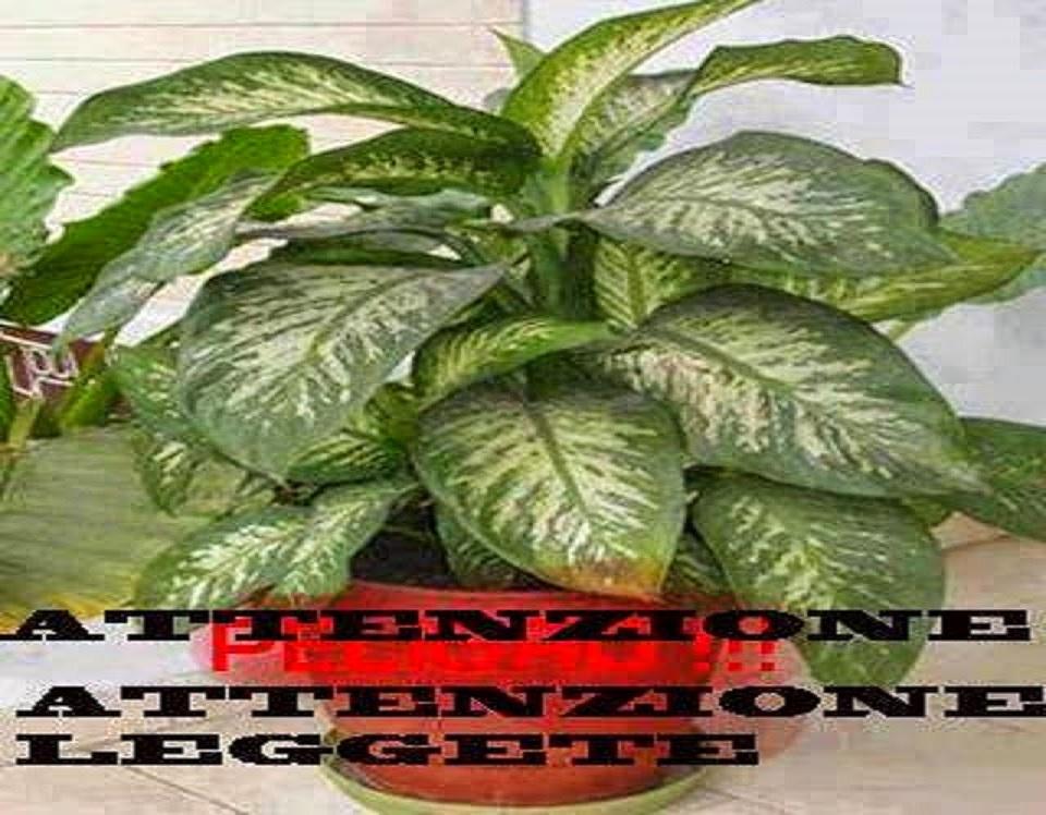 Attenzione tutte le persone che hanno questa pianta for Case che hanno ascensori